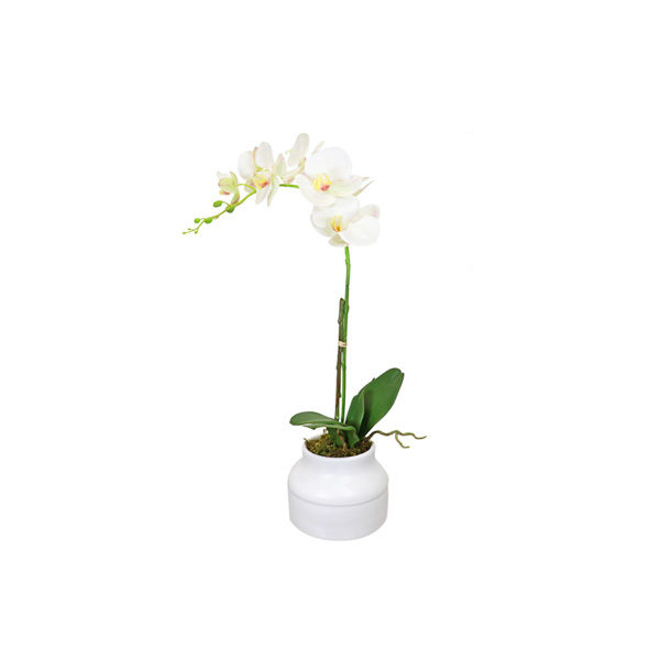 P1258-White Phalenopsis Arrangement-63cm